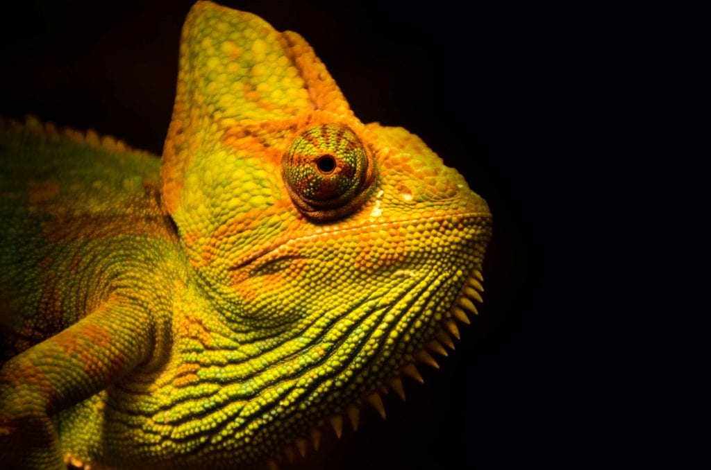 Image of a chameleon. In business, you need to move with trends and adapt to your surroundings.