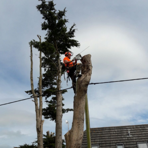 Professional tree surgeons on the Isle of Wight