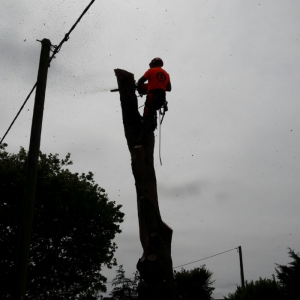 Tree dismantling on the Isle of Wight.