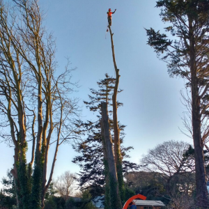 Whatever size tree, we can manage it!