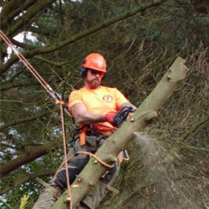All of the staff are trained arborists who know how to use professional equipment.