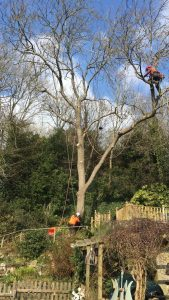 Branch Lowering, Isle of Wight