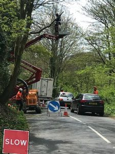 Highway tree management in the West Wight