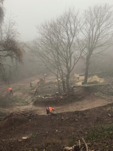 tree surgeons carrying out tree felling